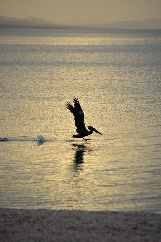 A pelican lands on the water just offshore.