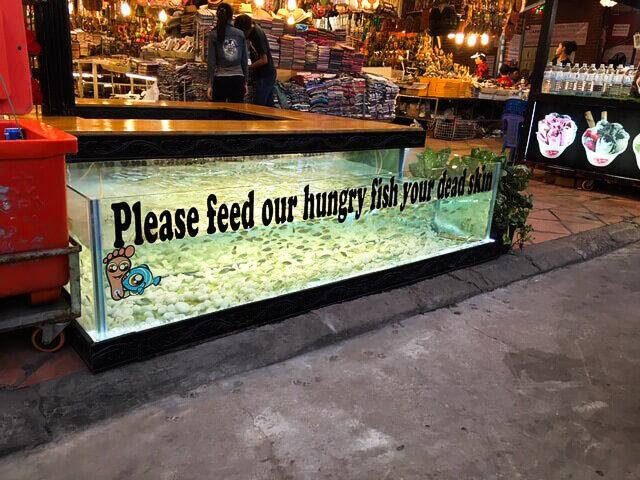 fish spa tank siem reap.jpg