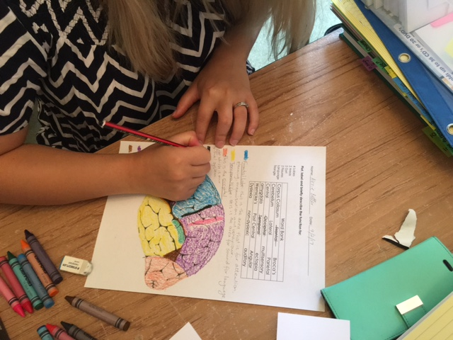 Engaging (and identifying) the different parts of the brain.