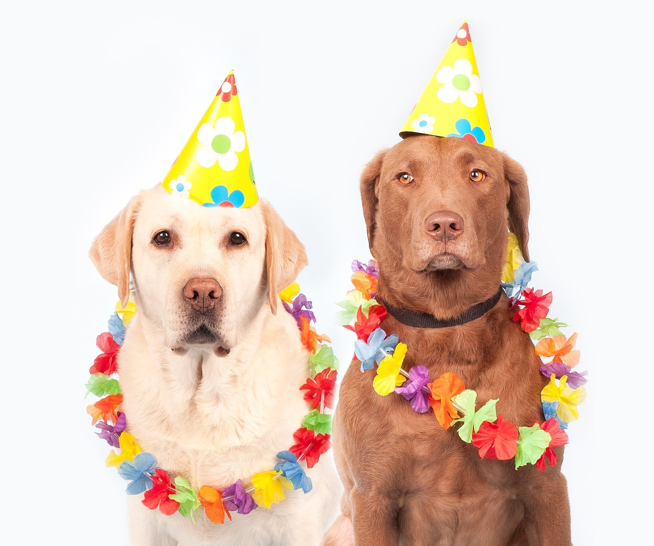 dogsparty