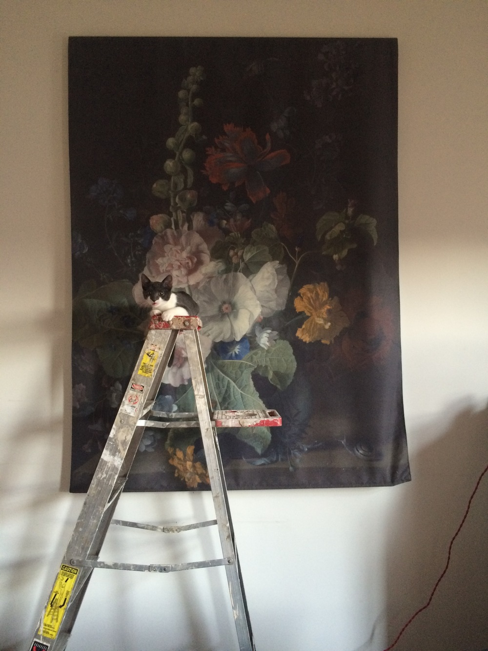 Chimichanga doing her best to look like a Dutch master's painting. She's strangely thrilled by that ladder.