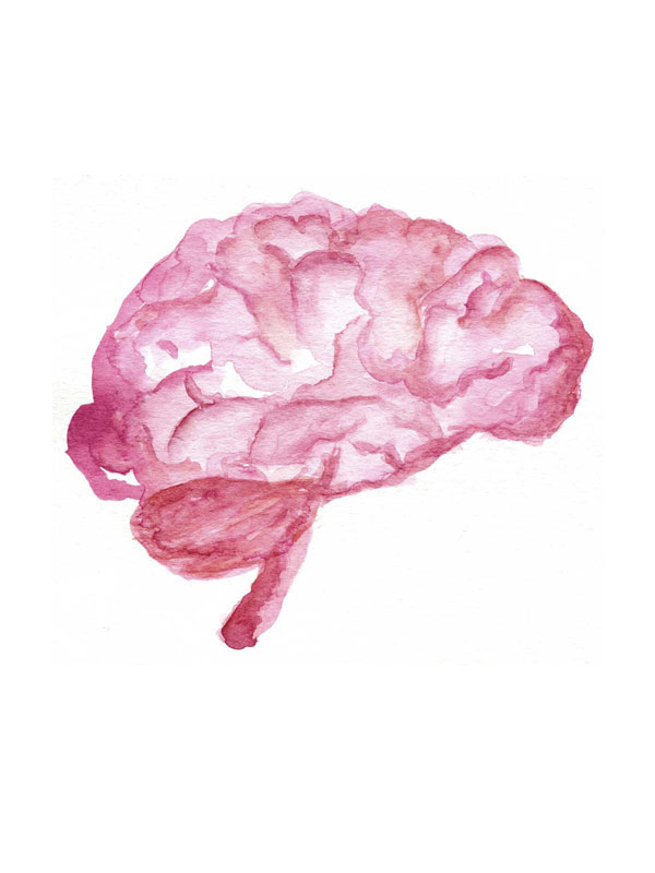 endocannabinoid-system-brain-illustration-hempsley
