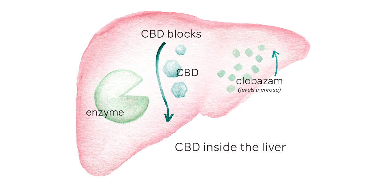 liver-cbd-clobozam-illustration-graphic-cbdsafety.jpg