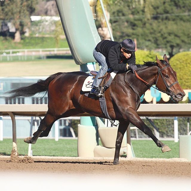 We have a fantastic day of racing ahead 🏇 Slewgoodtobetrue runs in the G1 Santa Anita Oaks, post time is 1:00pm PST. Also Cajun Treasure and The Hunted run in the 11th race @santaanitapark , post time is 5:50pm PST!