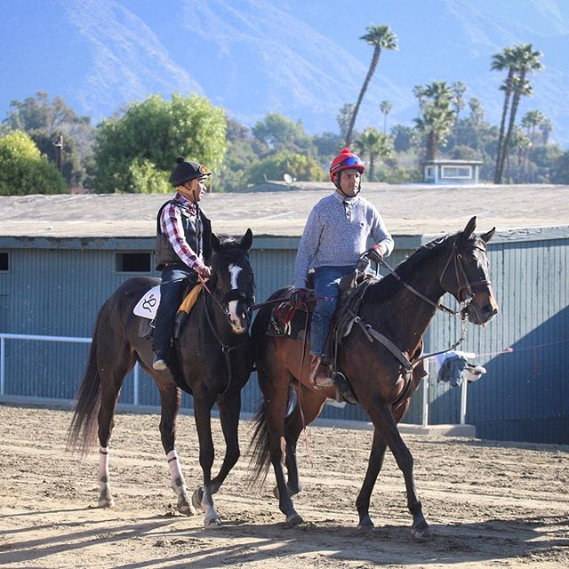 Dark Vader is back in action today @santaanitapark in the 7th race, post time is 4:12pm PST! #MayTheForceBeWithYou 🏇  #horseracing #darkvader #horsesofinstagram #thoroughbred #racehorse #horse #americasbestracing #caracingstables