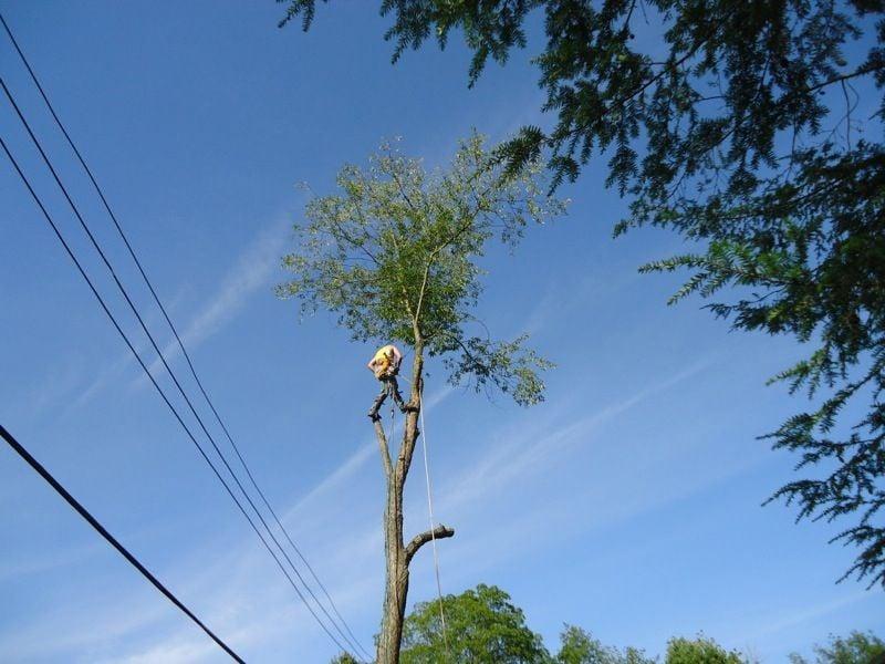 sidelines worker in a tree 2.jpg