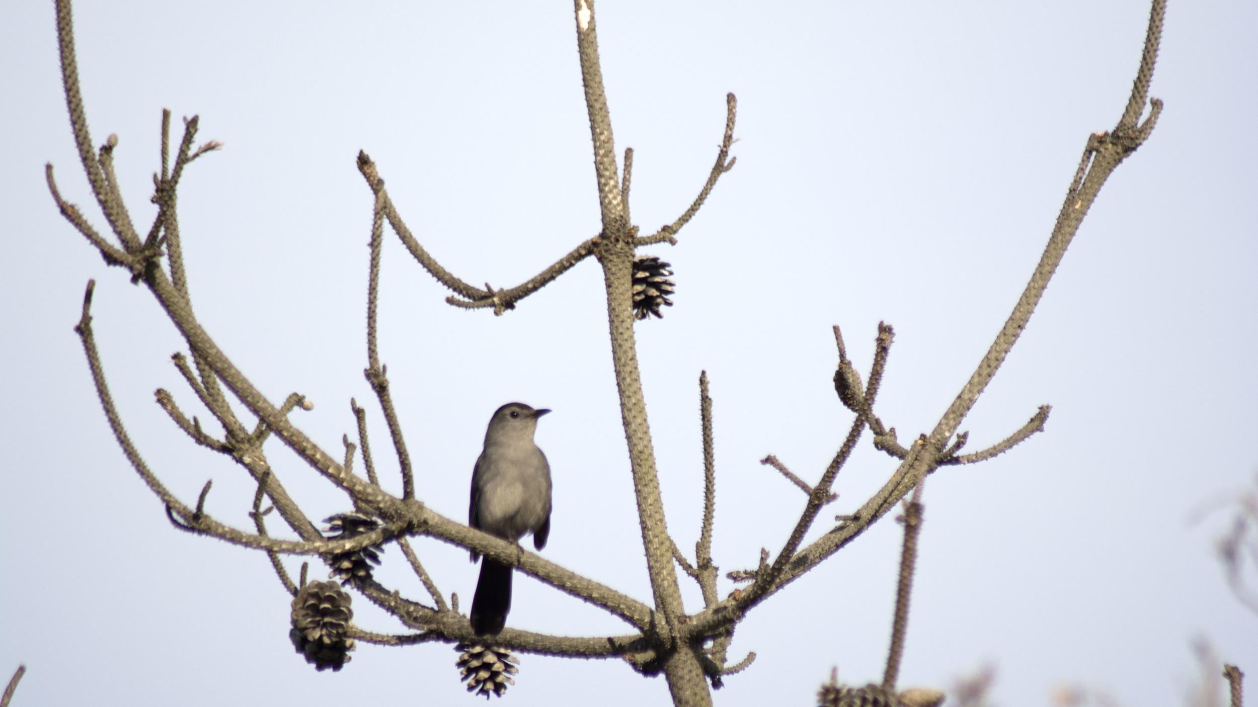 bird8.jpg