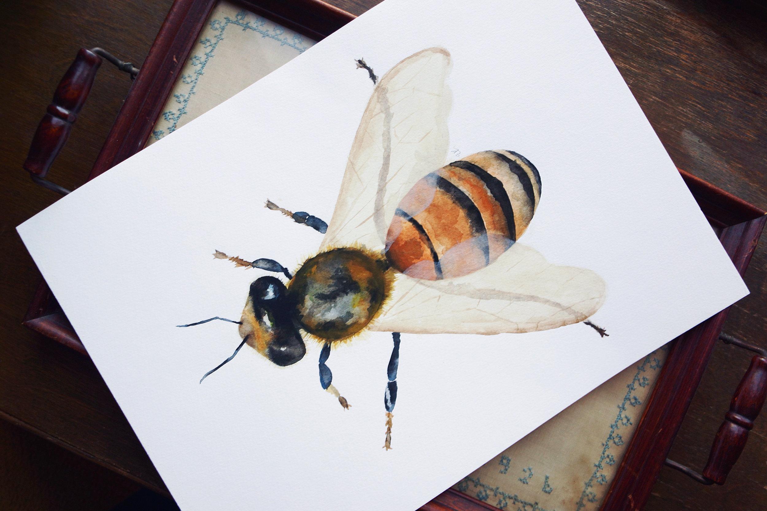 Honeybee_2.jpg