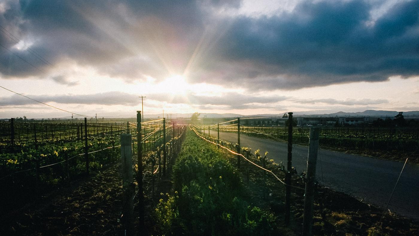Wine Vinyard in Napa, CA photography by Rob Gomez