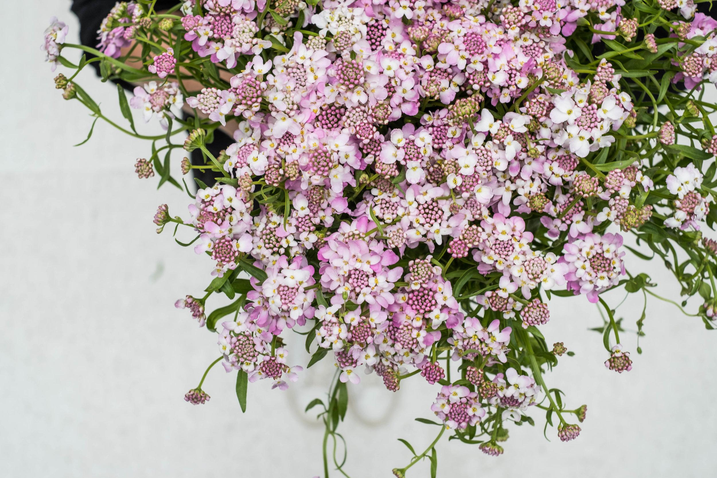 bloemen21-06-3.jpg