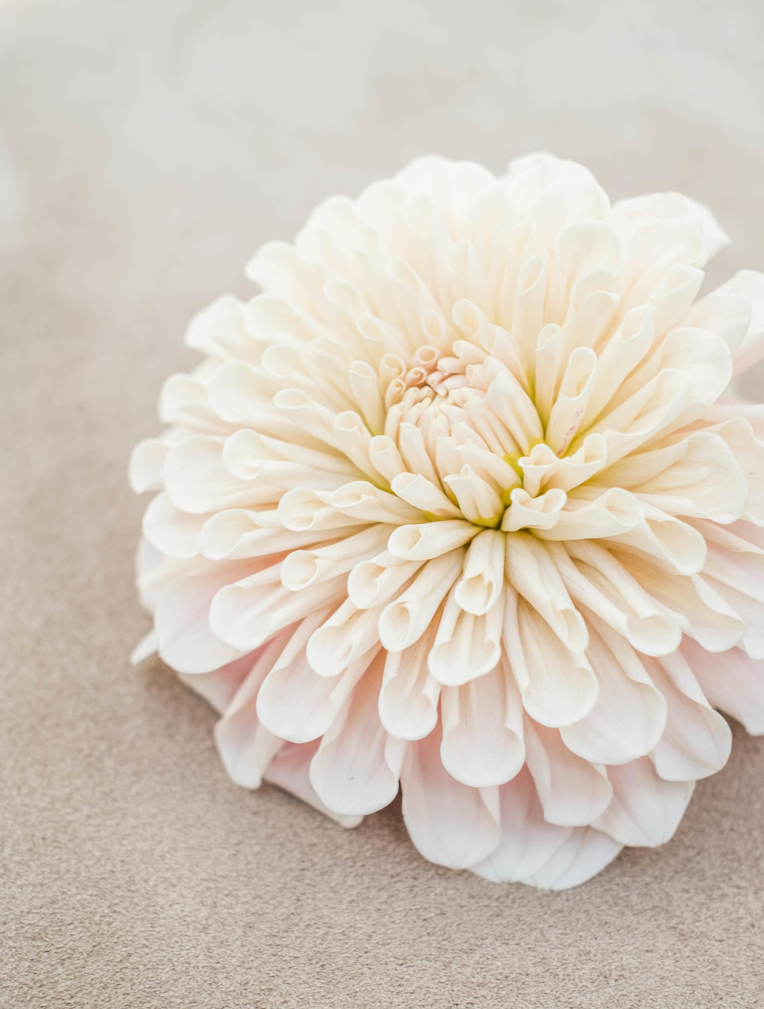bloemen21-06-8.jpg