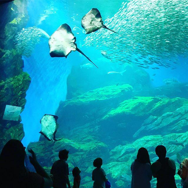 Night aquarium 🐡🐠🐟🐬🐳🦈🐋🐙🦑🦐🦞🦀. . . #nighttime #aquarium #epmboys #summer #sendai #子供達も #大きくなって #夜のアクティビティも #参加できるようになりました