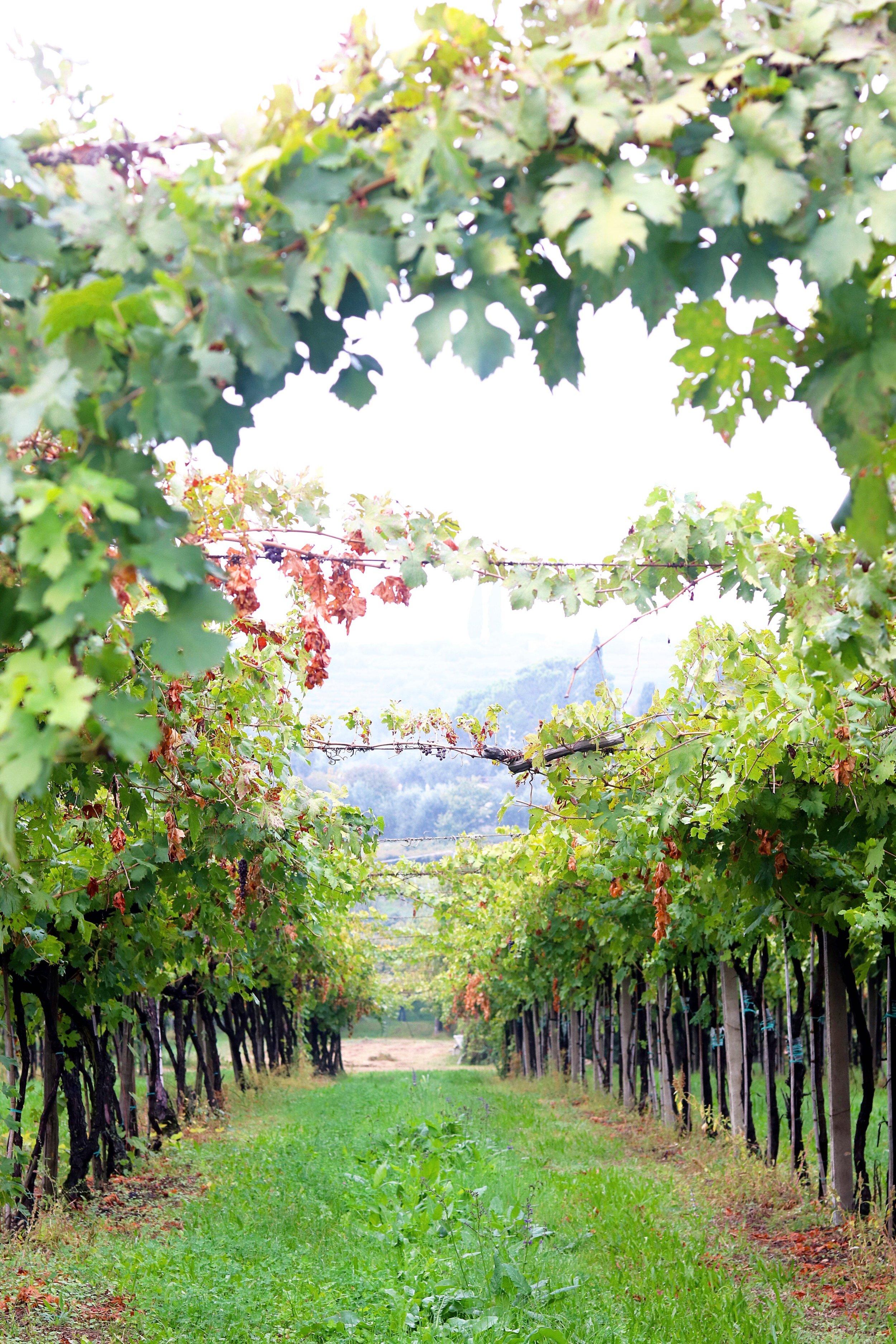 Valpolicella Wine Country