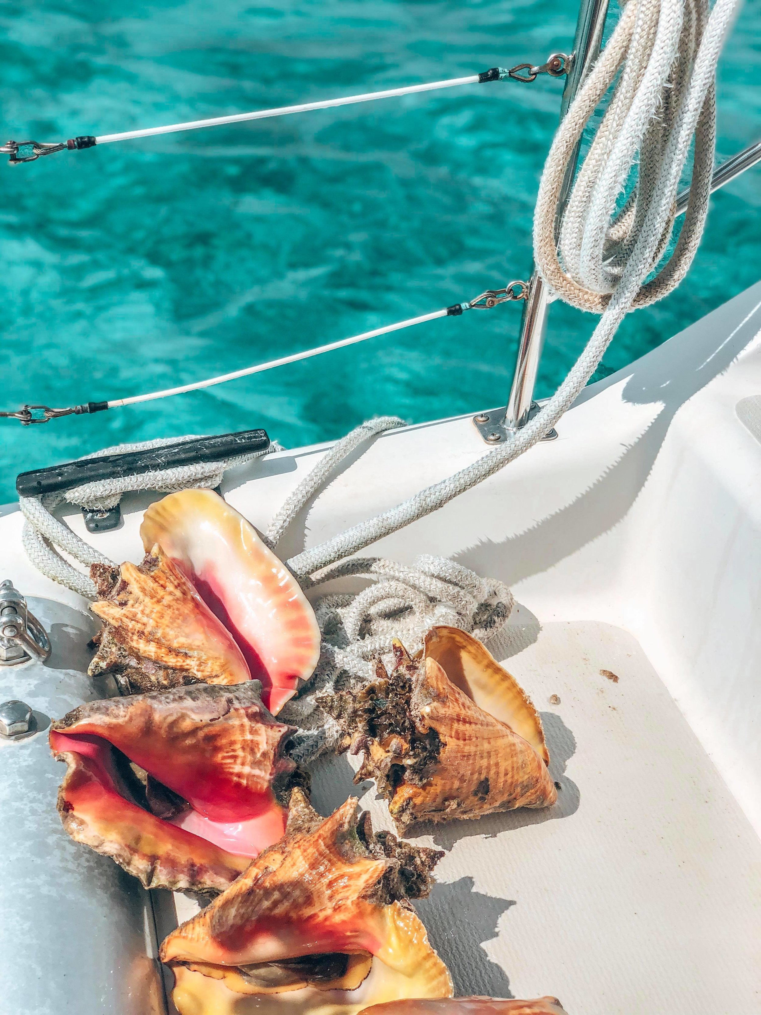 Conch_Cayman_Islands