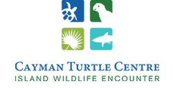 Turtle_Farm_Cayman