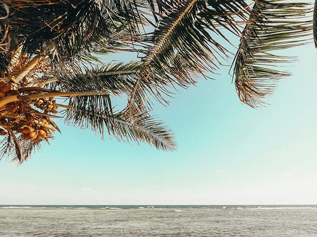 Anyone else in need of a day under the palms? 🌴  Grand Cayman is an absolute treasure trove of deserted beaches. Head over to our website to find out about the best secluded beaches in Cayman.  Click the link in our bio.    #Thisiscayman #Caymanislands #Caribbean