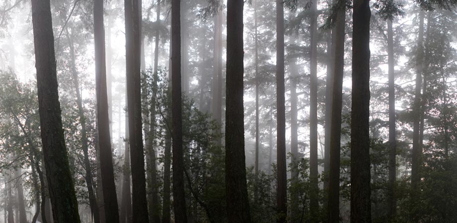 Muir Woods, CA 2011