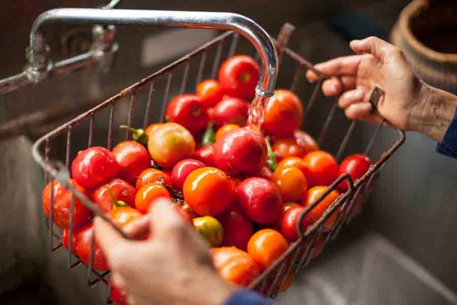 Food_photography_tamatoes_farm_to_fork_davis_sacramento_feild_wash_fresh_produce.jpg