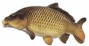 Manor Fishery fishing in the UK Kent