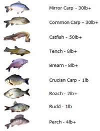 Manor Fishery UK fishing fish chart