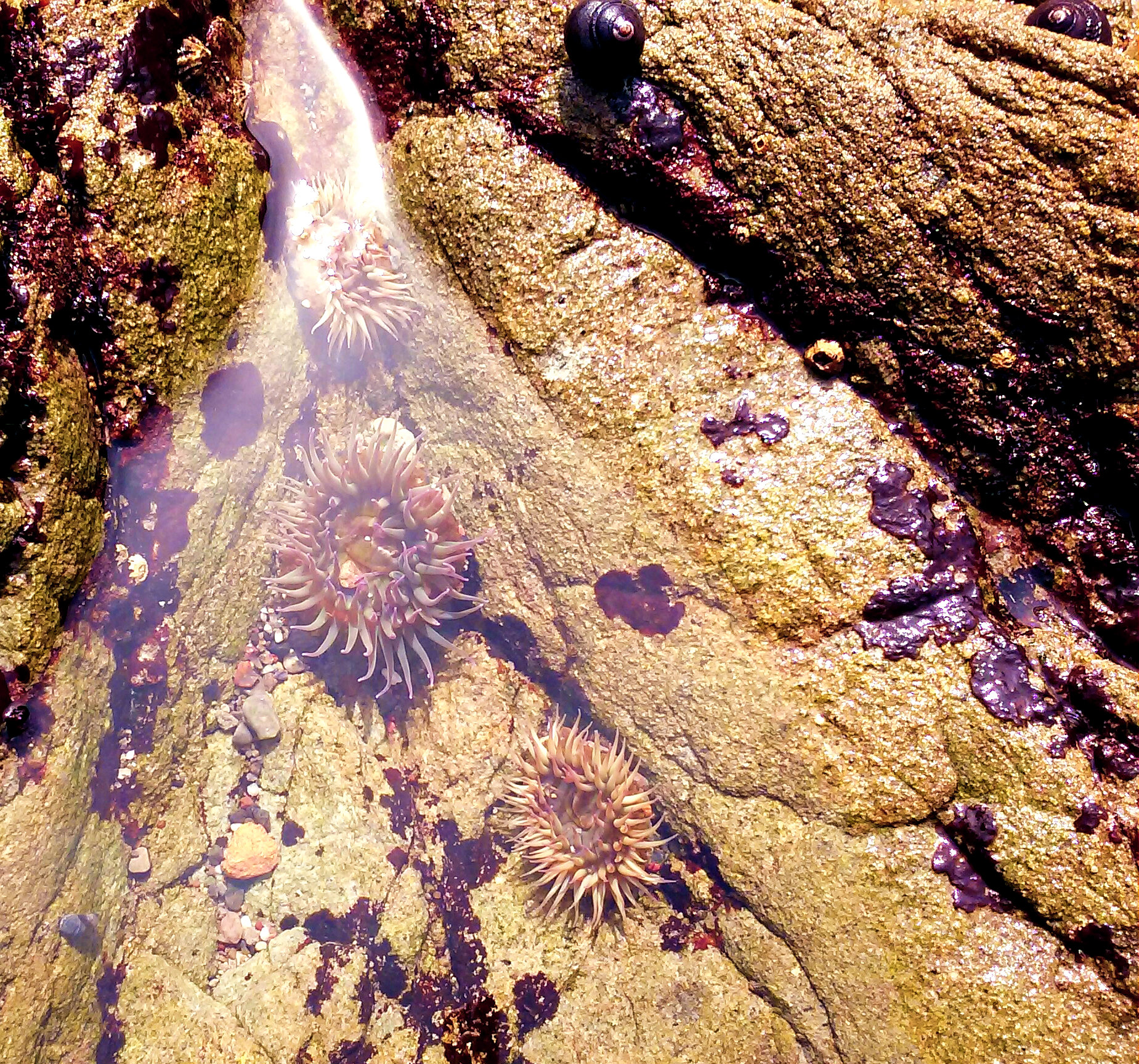 tide-pools-at-gerstle-cove.jpg