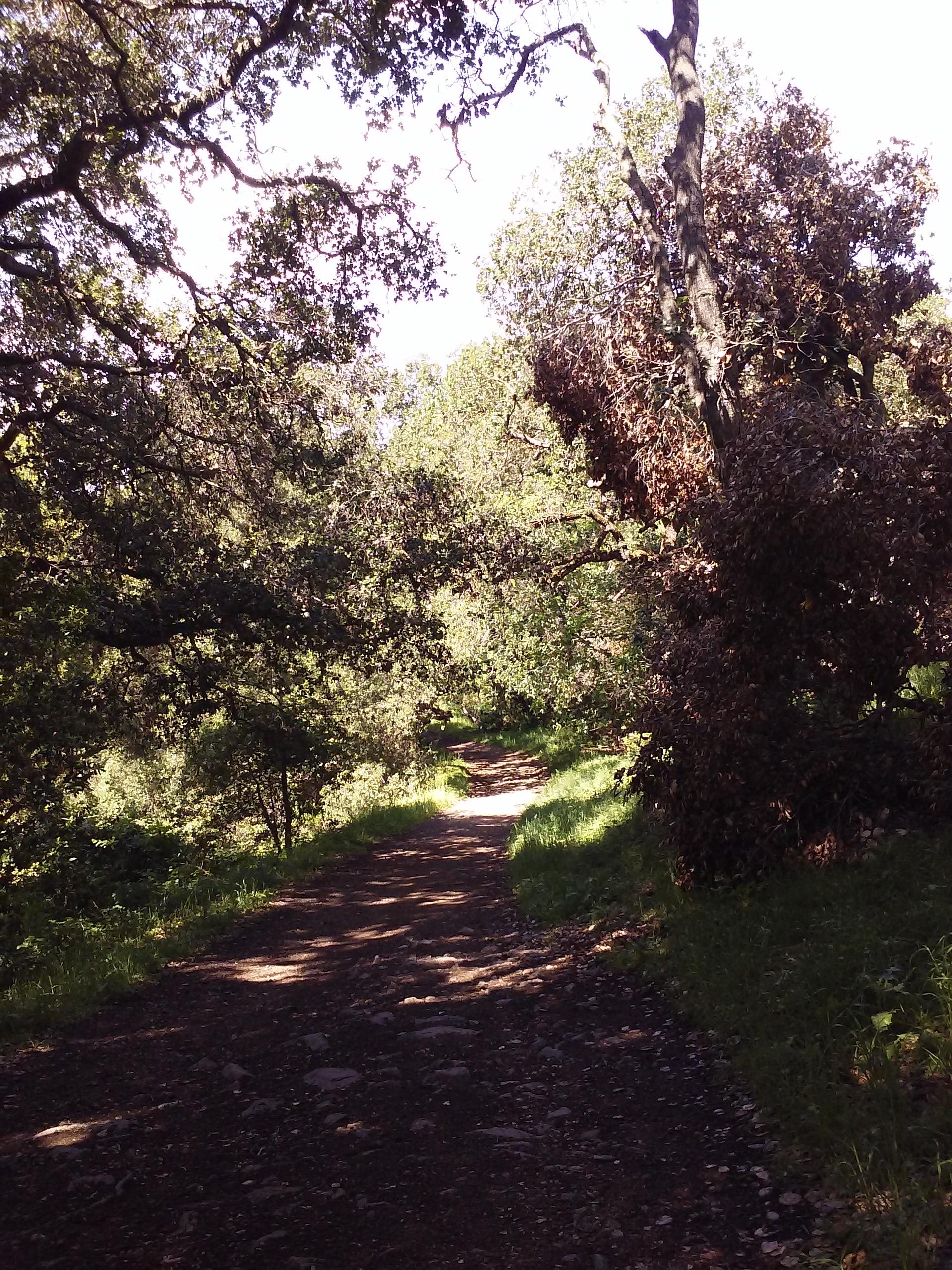 santa-teresa-county-park-4.jpg