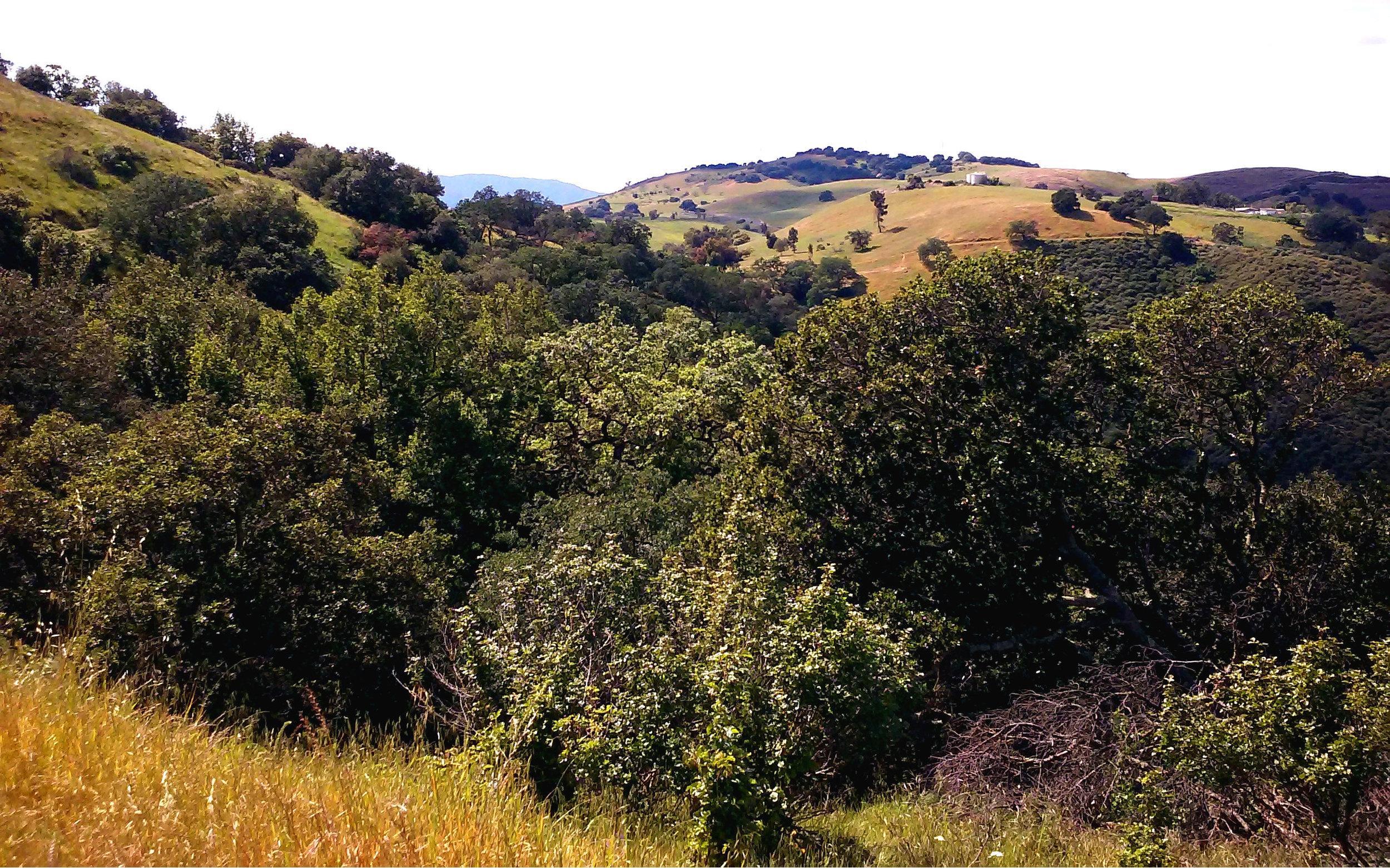 santa-teresa-county-park-7.jpg
