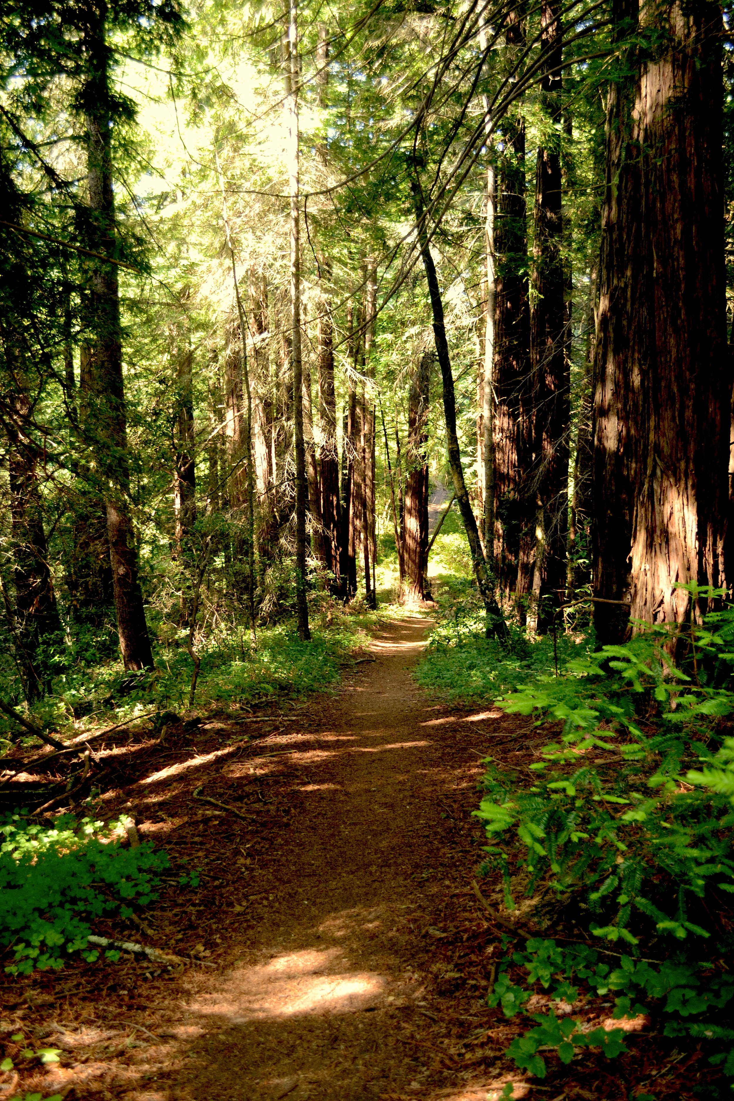 trail in the medicine buddha