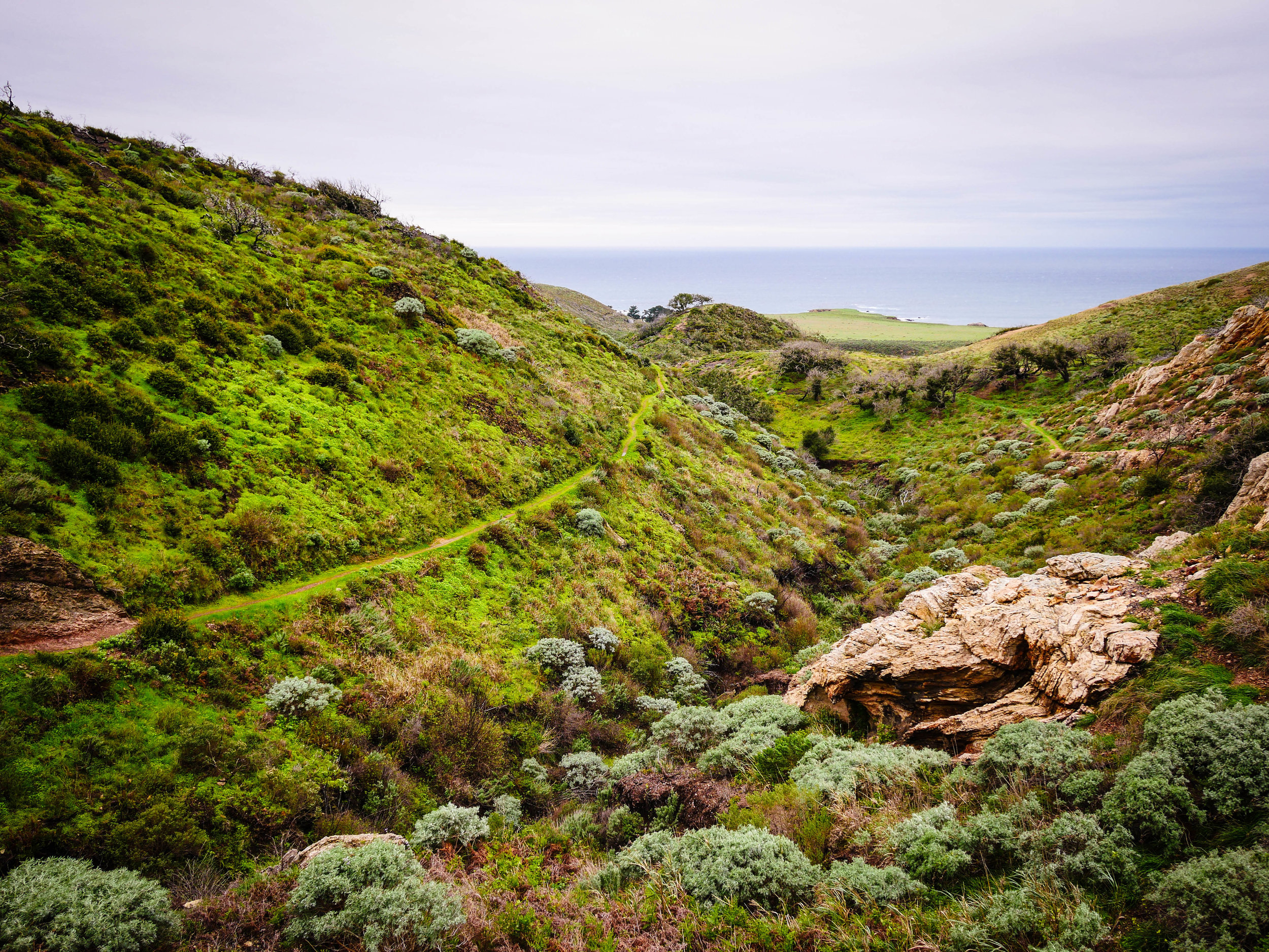 Recent rains turn the hills a lush green at Montana de Oro State Park.