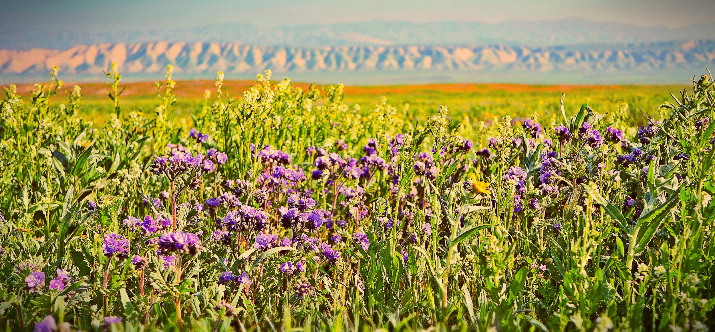 flowers two .jpg