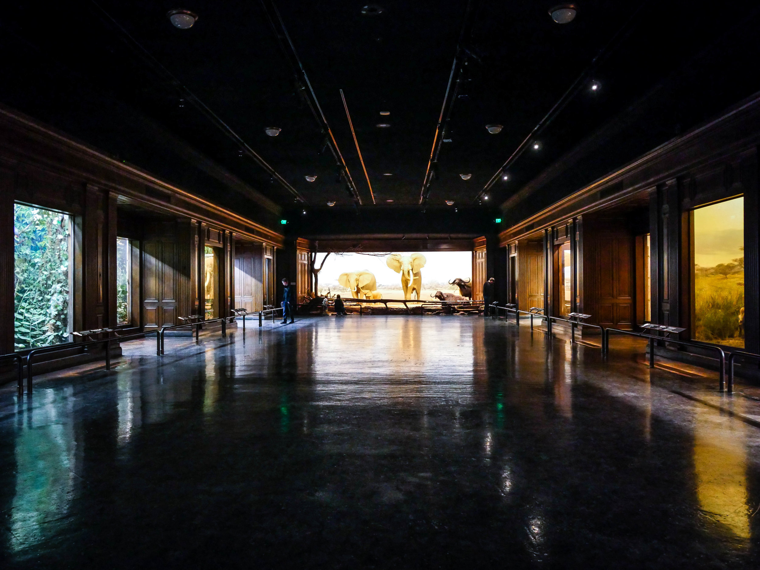 The African Mammal Hall