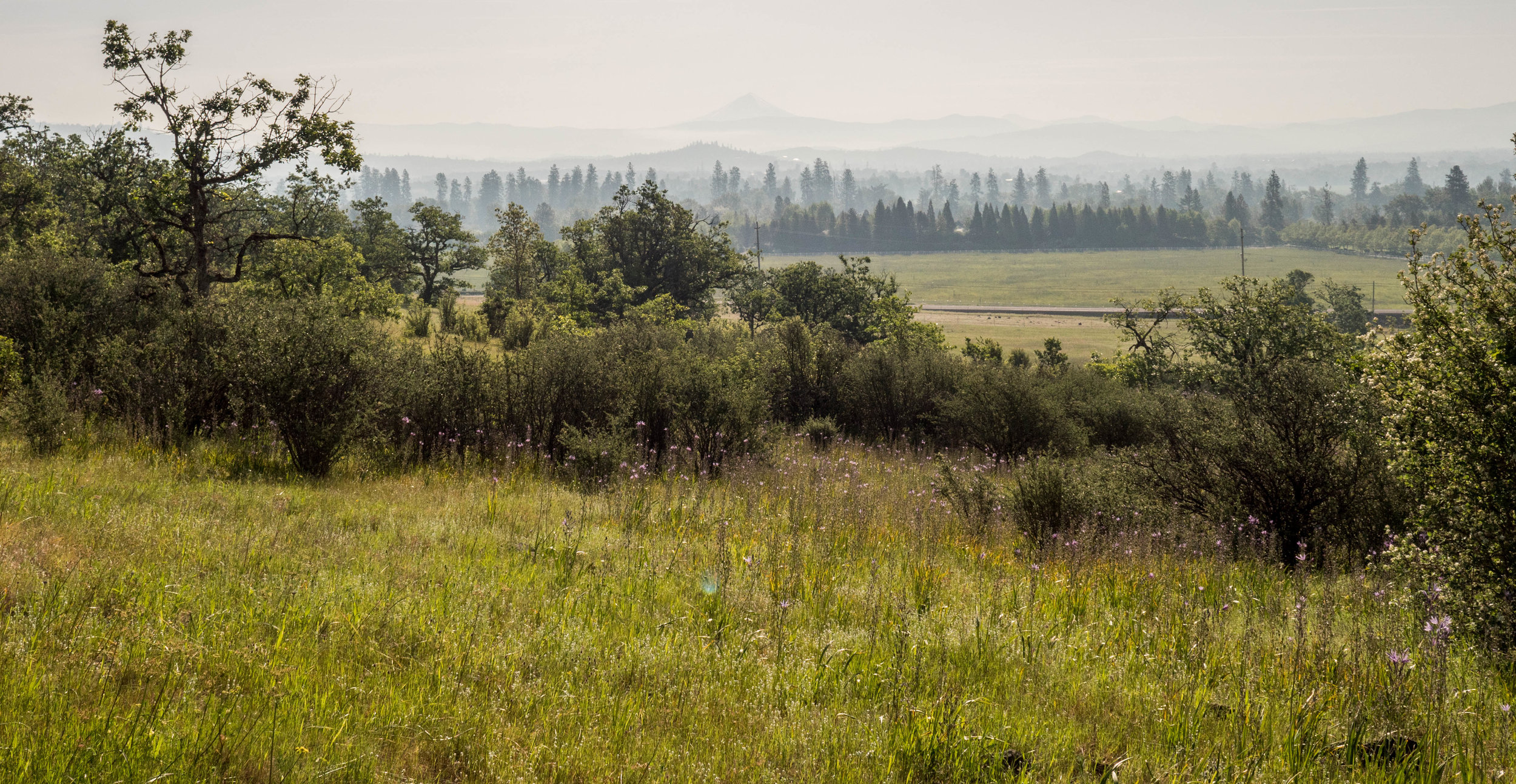 Mt. McLoughlin in the hazy distance; there was a wildfire the day we went. It's much easier to see in person.