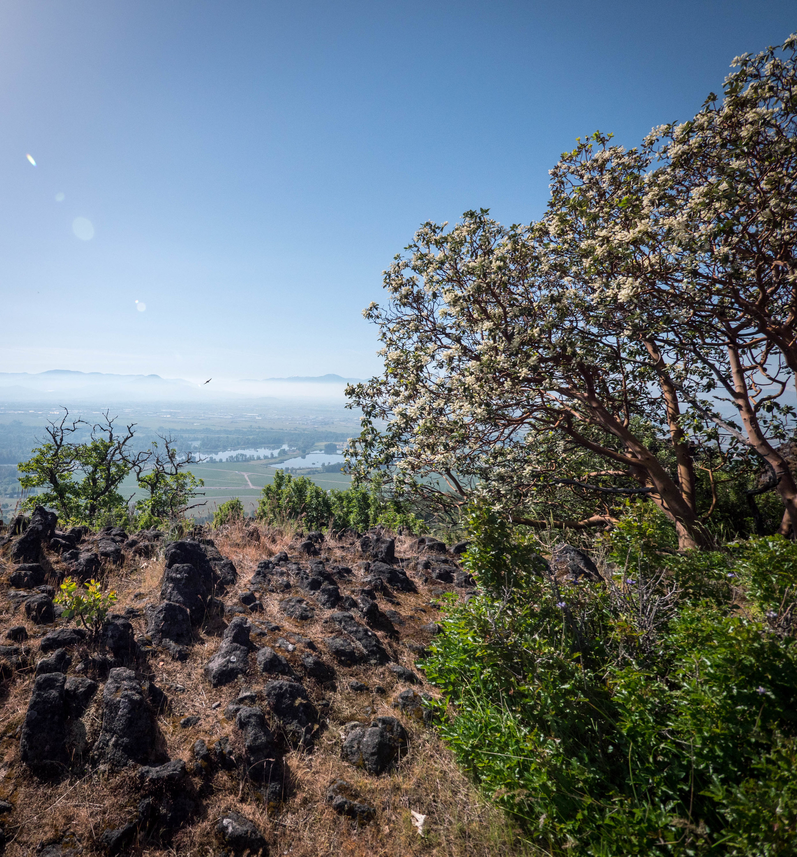 Rocks, trees, wildflowers, and views make for a beautiful hike.