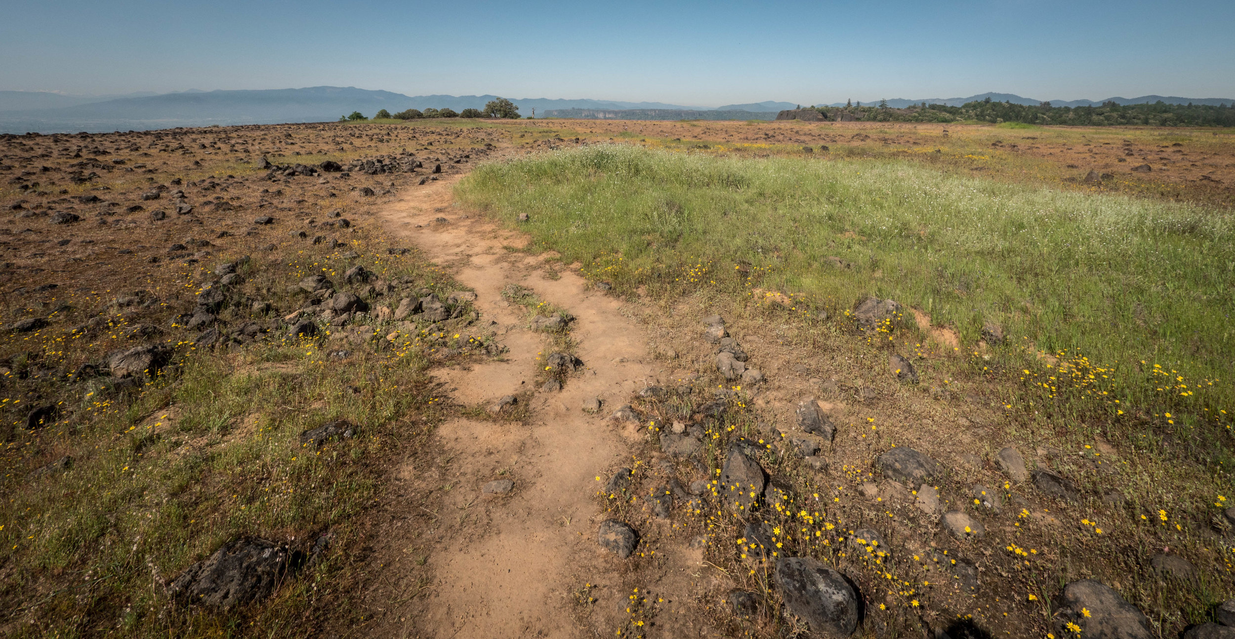 The trail going off into the distance. The top of the mesa is flat and spotted with wildflowers and grasses.