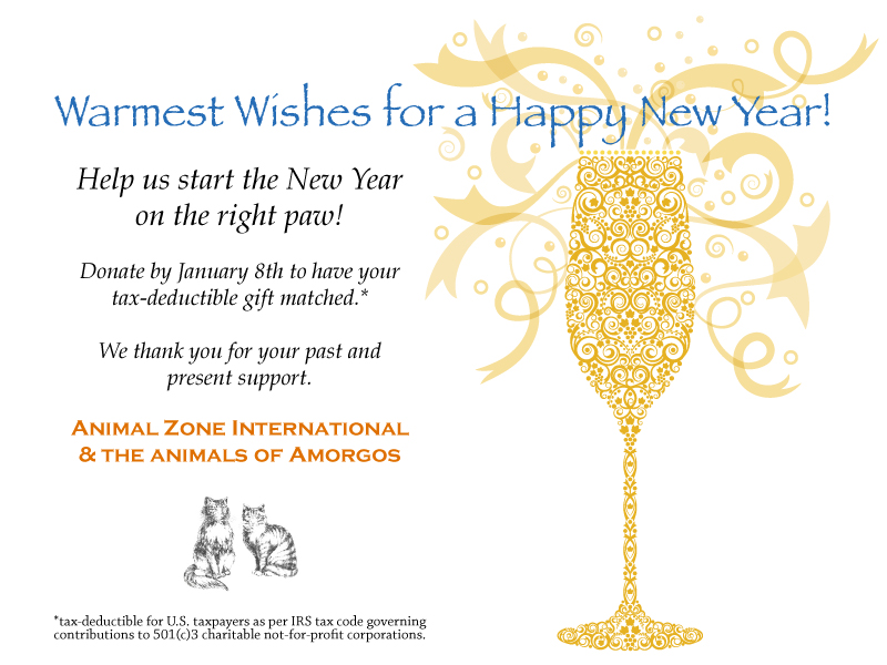 AZI-New-Year-card-final