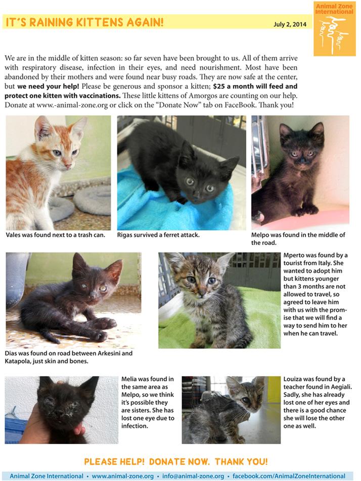 kittens 070214