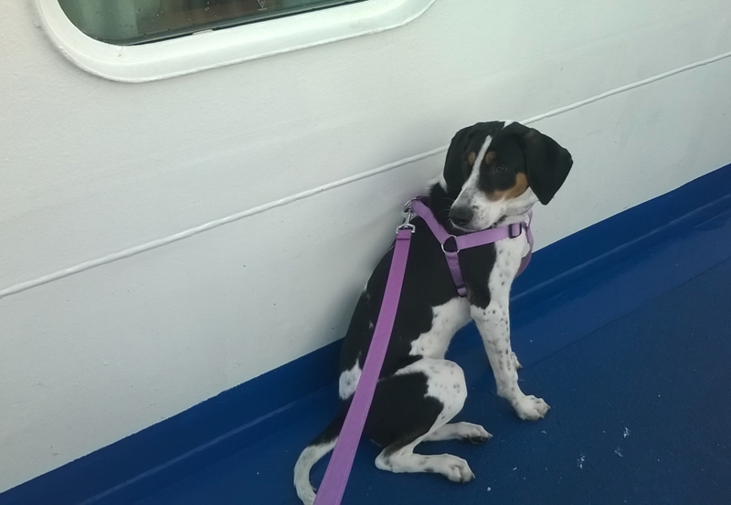 Luna on the boat