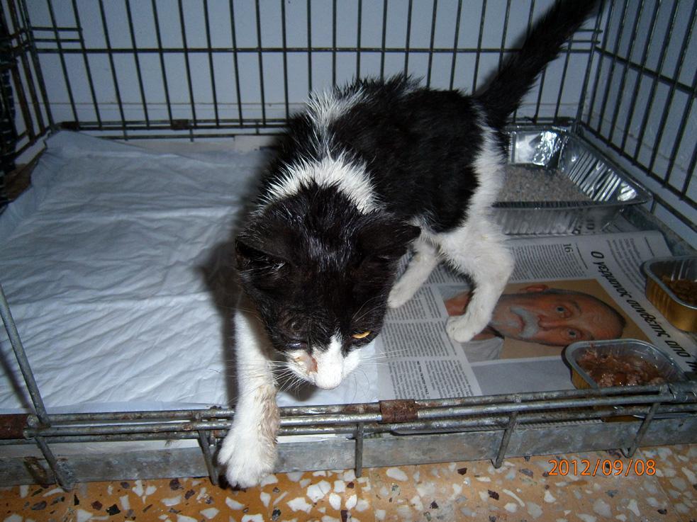 Aris, as kitten
