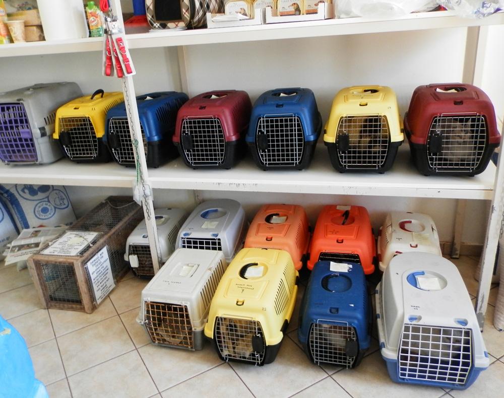 Cat Waiting Room