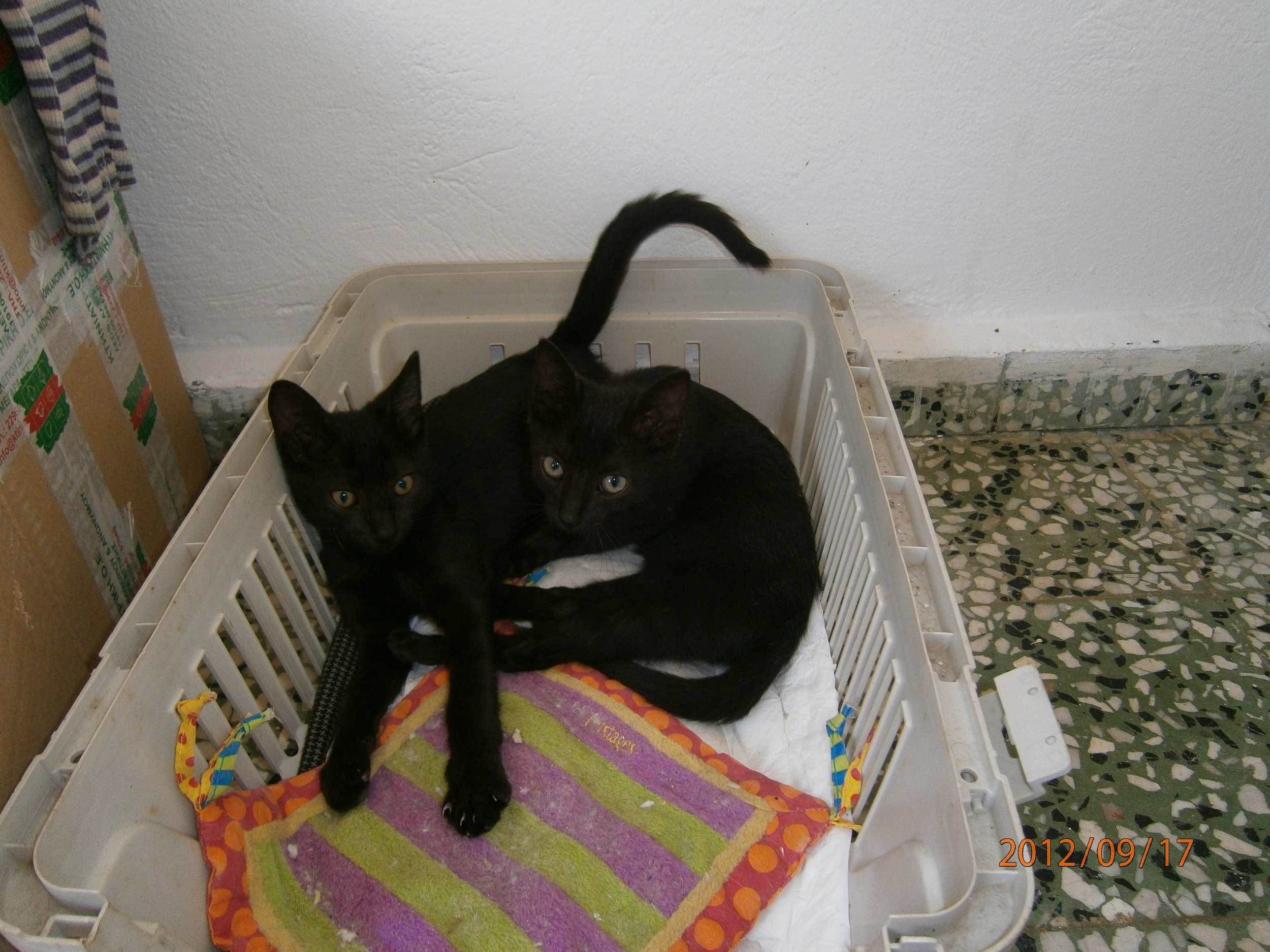 With his sister Daisy as kittens