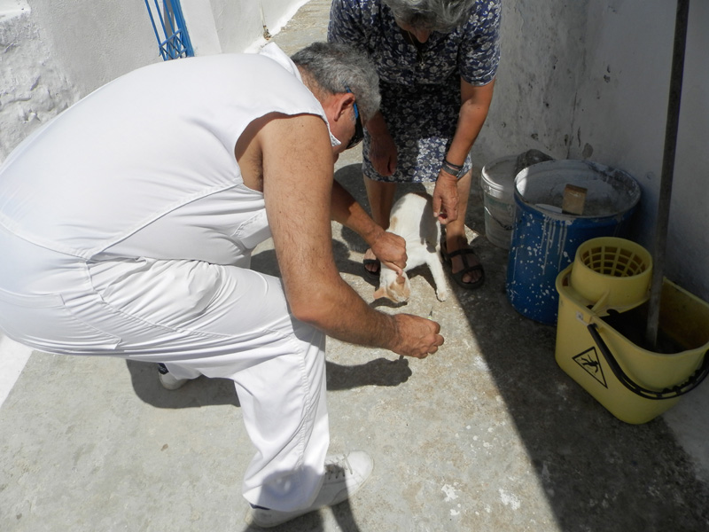 Dr. Dimitris Vasalakis vaccinates one of the stray cats that Mrs Tasia cares for in Ano Potamos.