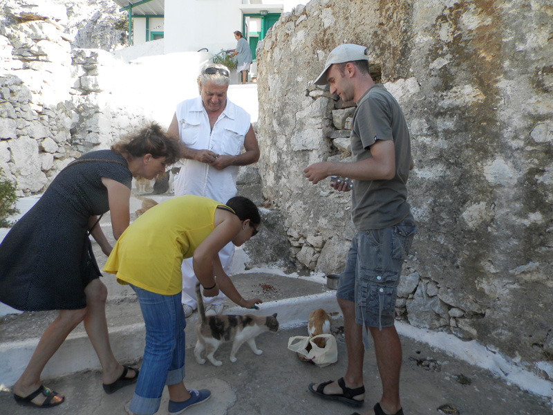 Our volunteer in Aegiali, Lily Clevede, Dr. Dimitris Vasalakis, our volunteer from WorkAway, Giorgos Zafiriou and AZI Coordinator Litsa trying to catch the cats in Langada in order to vaccinate them and give them pills against worms.