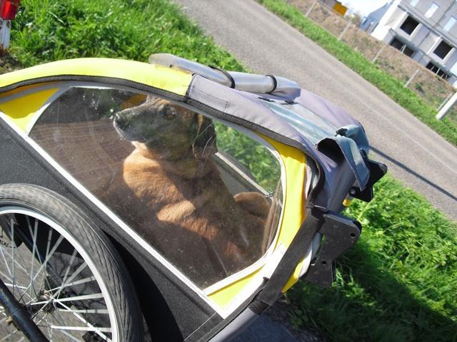 Charley in his bike cart.