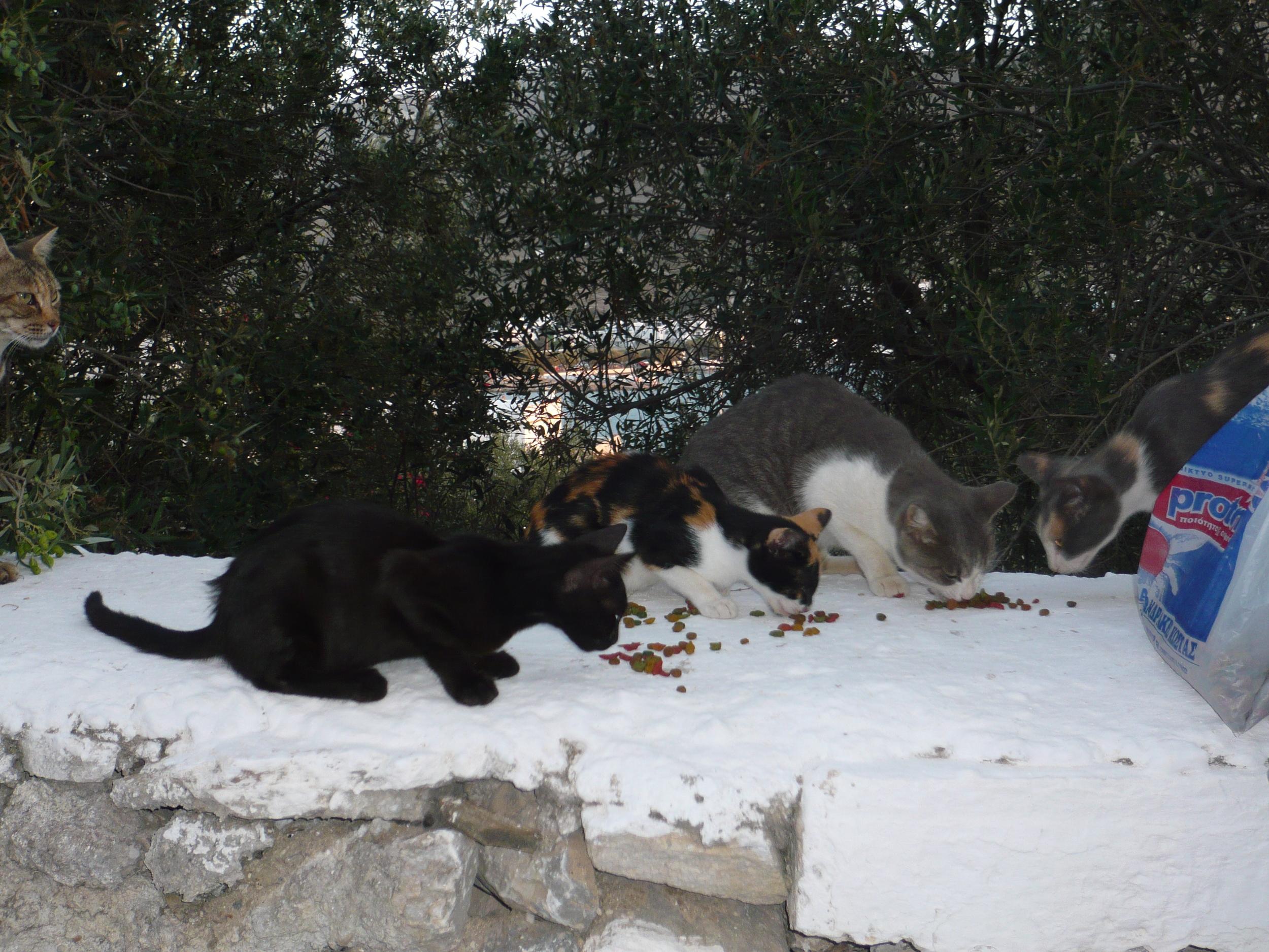3-Manolis-au-2010.jpg