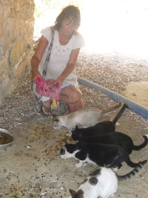 Juliette-Feeding-Cats2.jpg