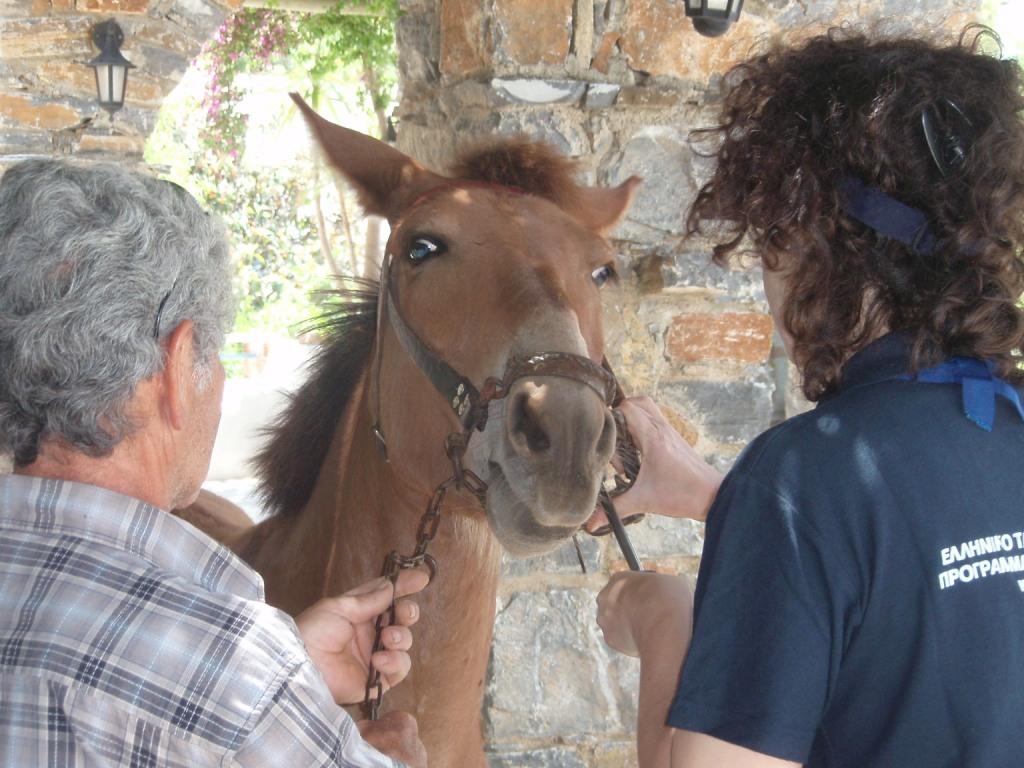 AMORGOS-Elisa-rasping-mules-teeth-1.jpg