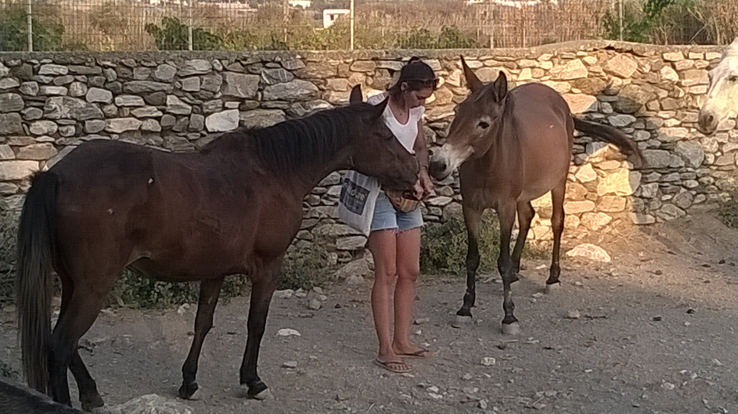 Inma gives treats to Paola the mare and Mona the mule
