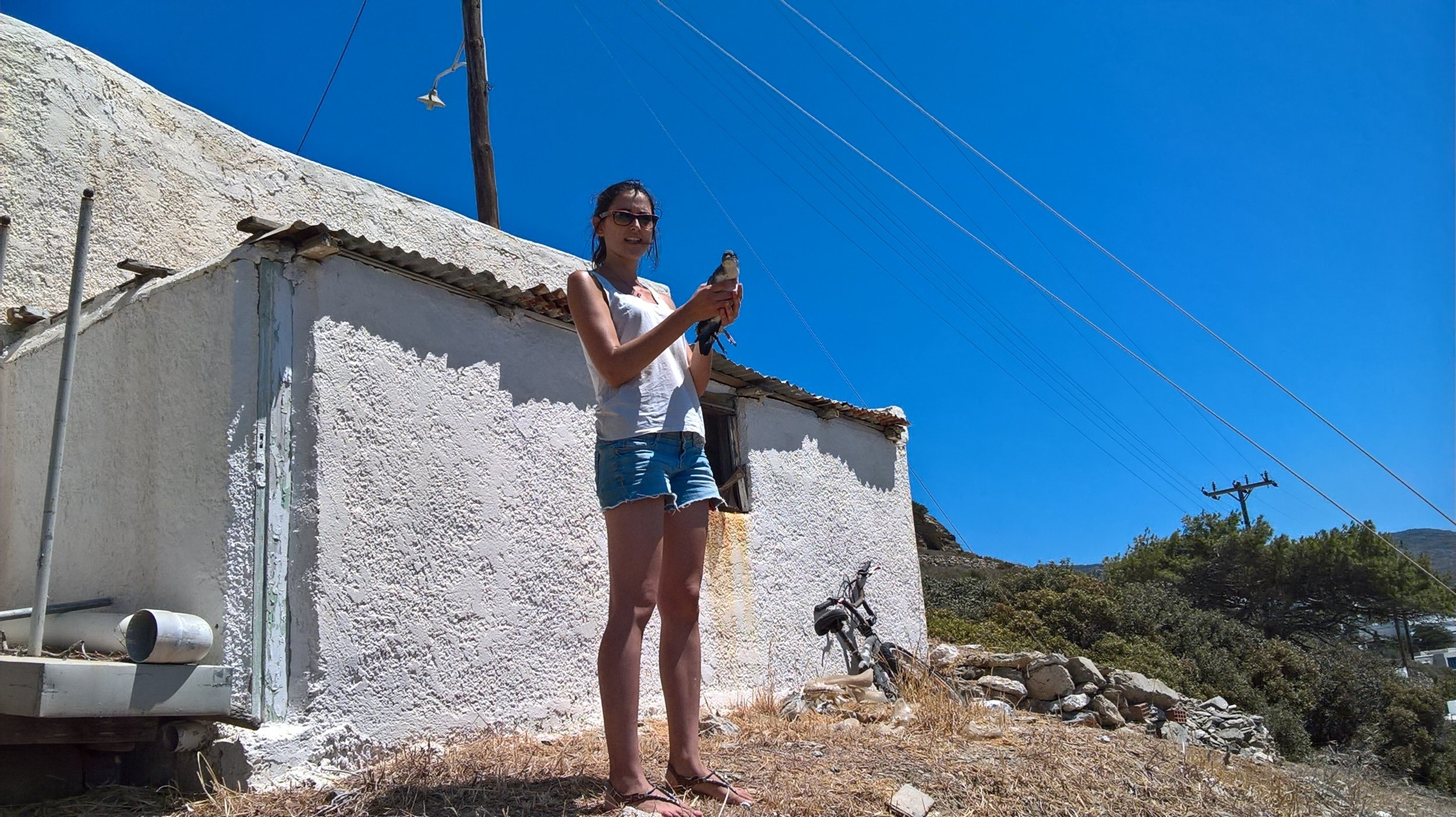 Inma releases a young sea bird (Mediterranean Puffinus Yelkouan) that was rescued by concerned citizens