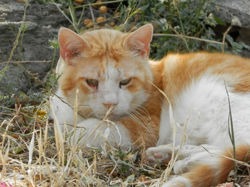 Plume in Amorgos  , before his health problems started