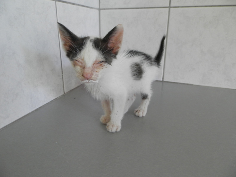 Voulitsa arrived as a very sick kitten